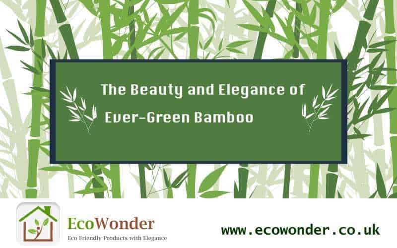 The Beauty and Elegance of Ever-Green Bamboo